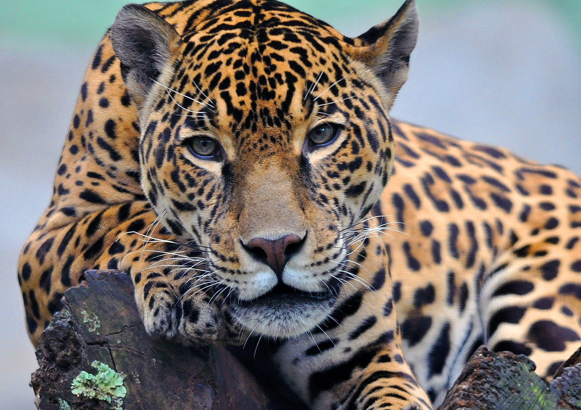 Jaguar widescreen