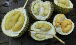 Durian widescreen