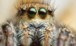 Jumping spider Widescreen