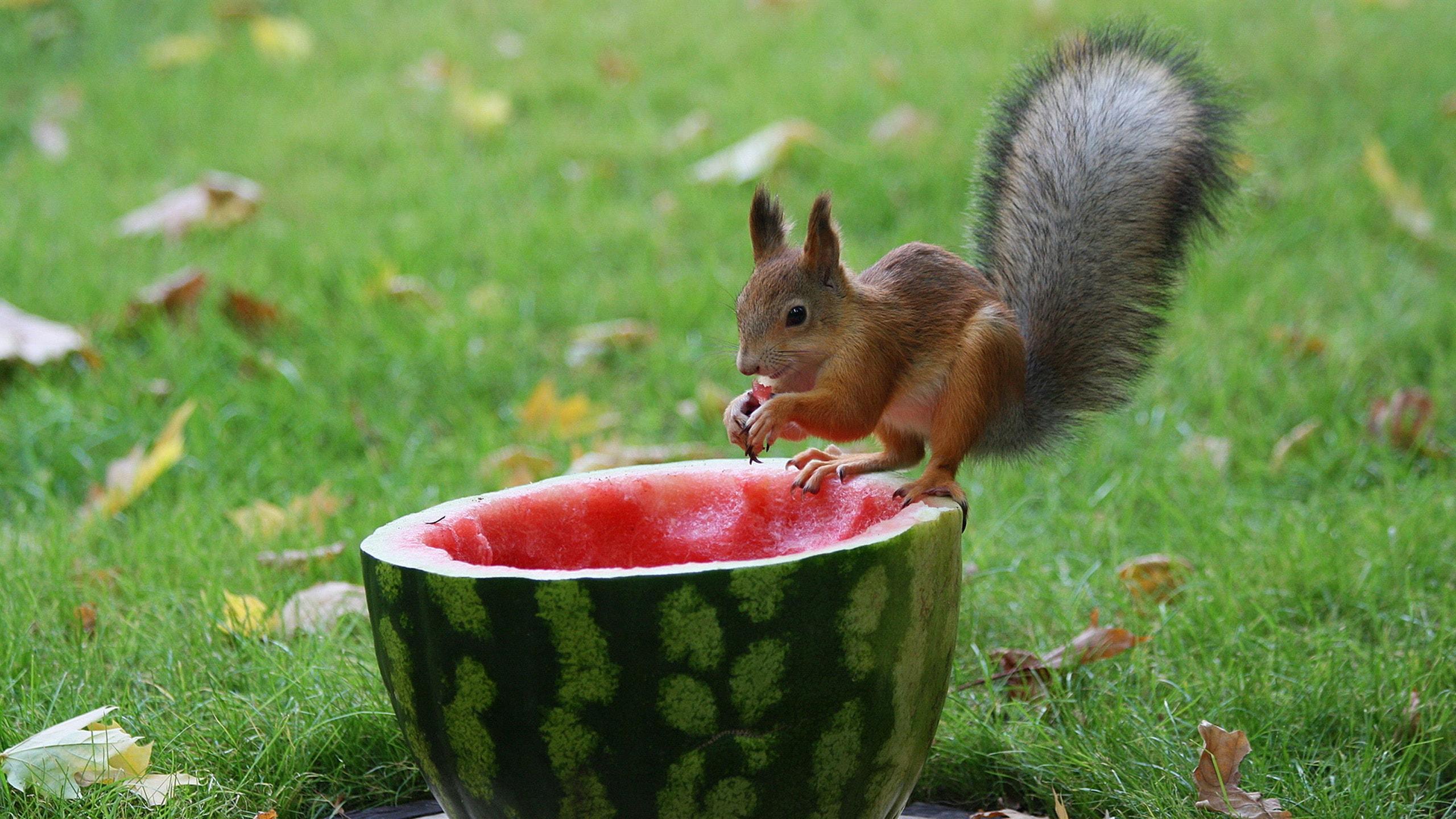Watermelon HD pics