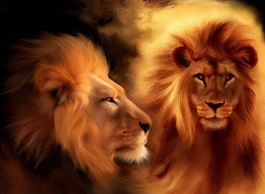 Lion desktop wallpaper