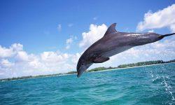 Bottlenose dolphins Download