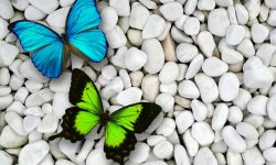 Butterfly Download