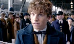 Fantastic Beasts and Where to Find Them desktop wallpaper