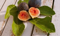Figs Download