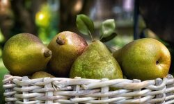 Pear Download