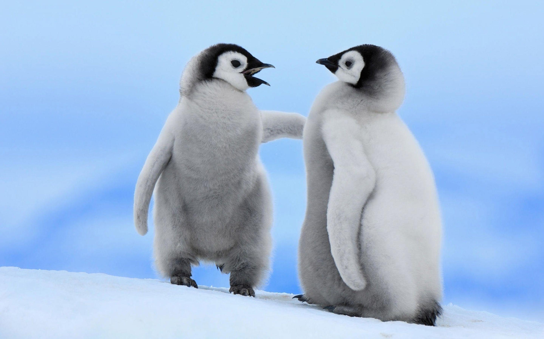 Penguin Download