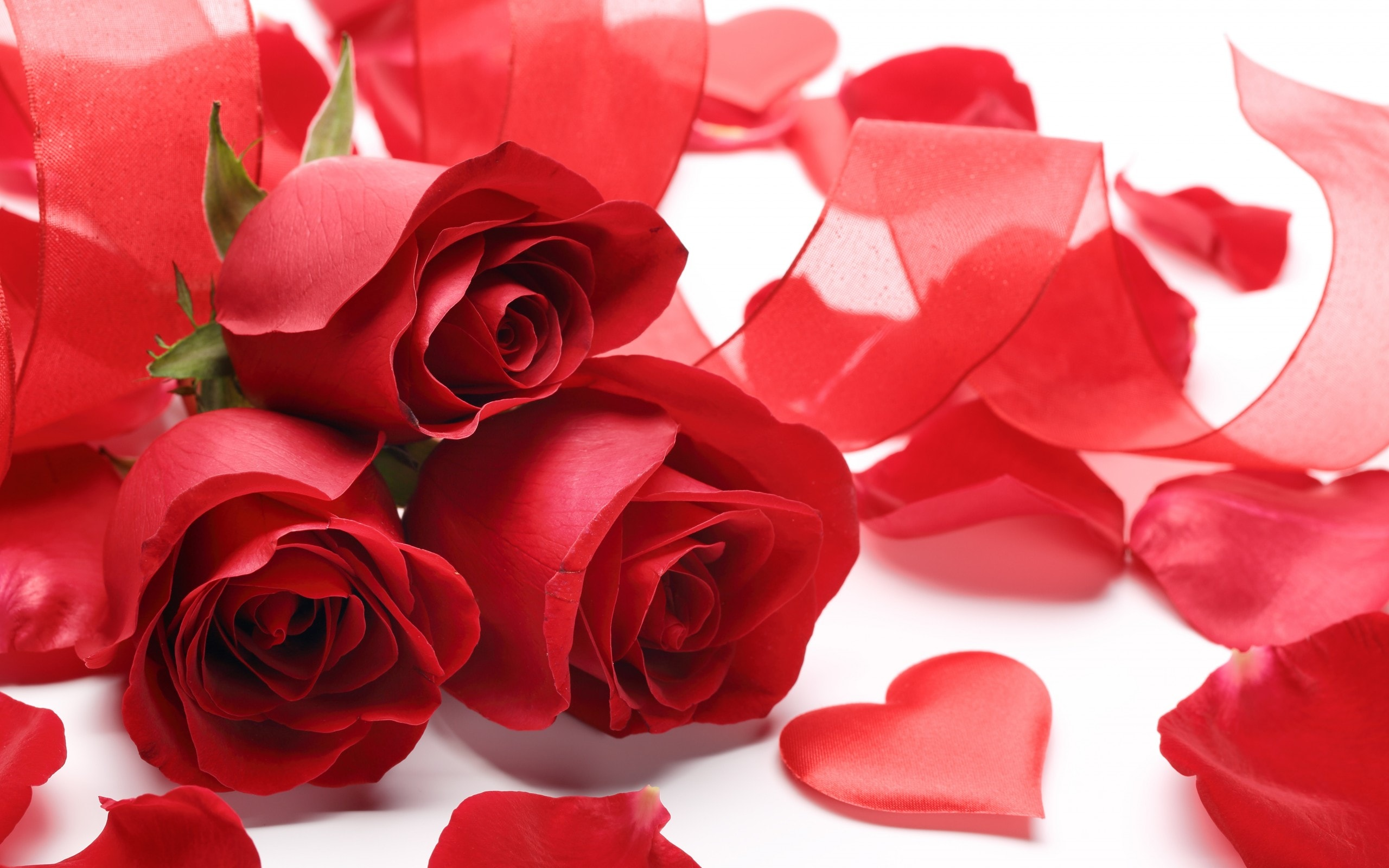 Valentine's Day High