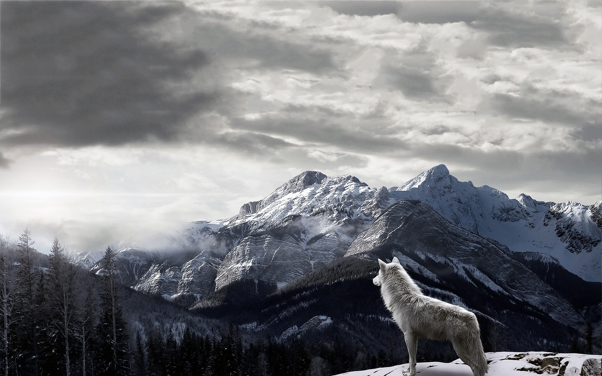 Wolf Desktop wallpapers