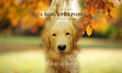 A Dog's Purpose Wallpapers