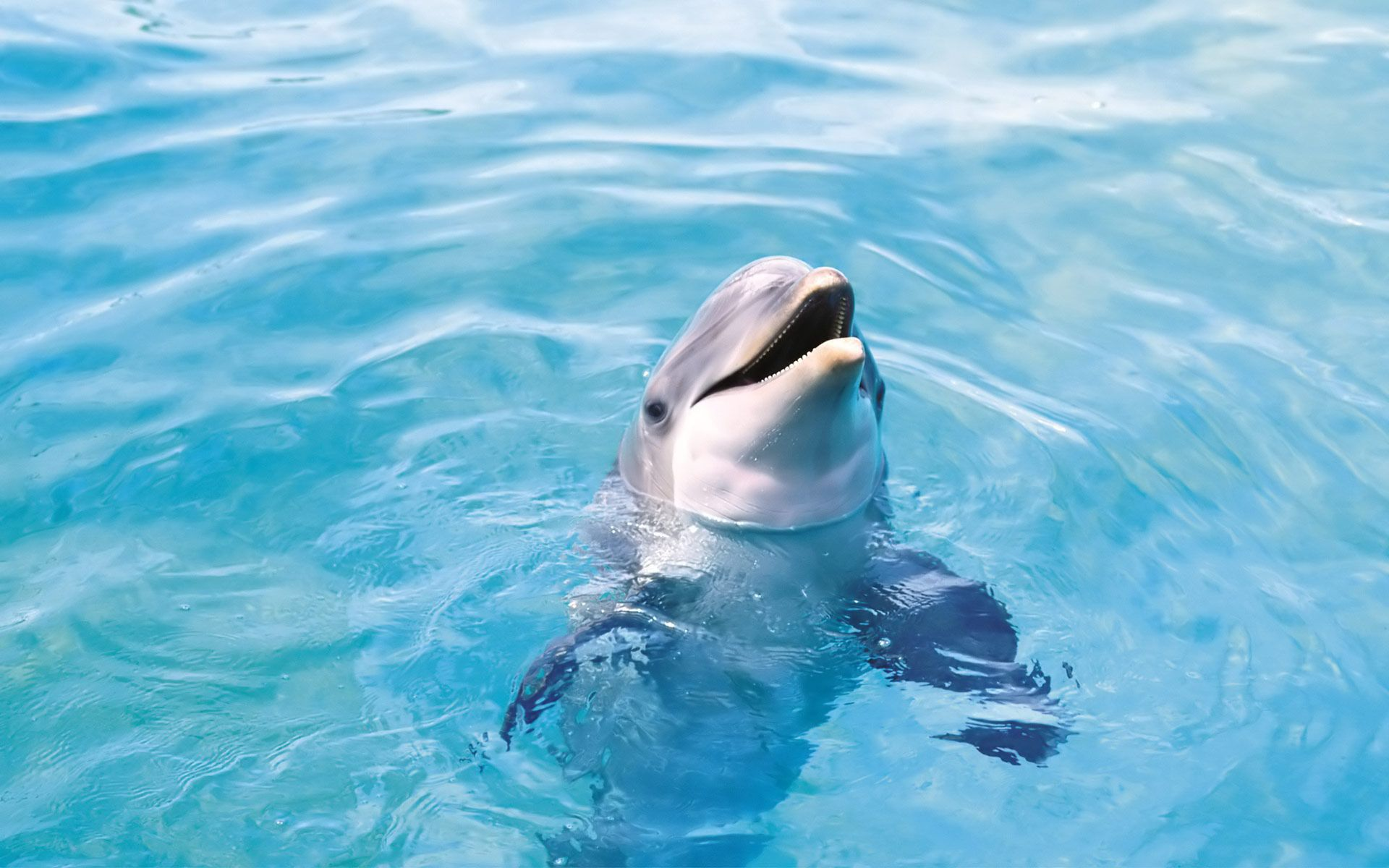 Bottlenose Dolphins HD Wallpaper 5 | Animals Wallpapers ...
