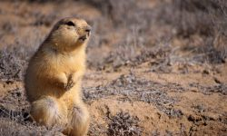 Gopher full hd wallpapers