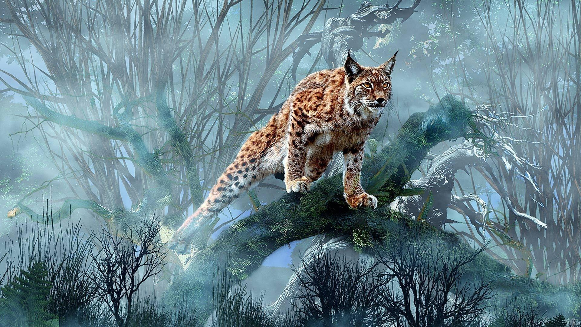 Lynx full hd wallpapers