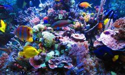 Marine Aquarium Backgrounds