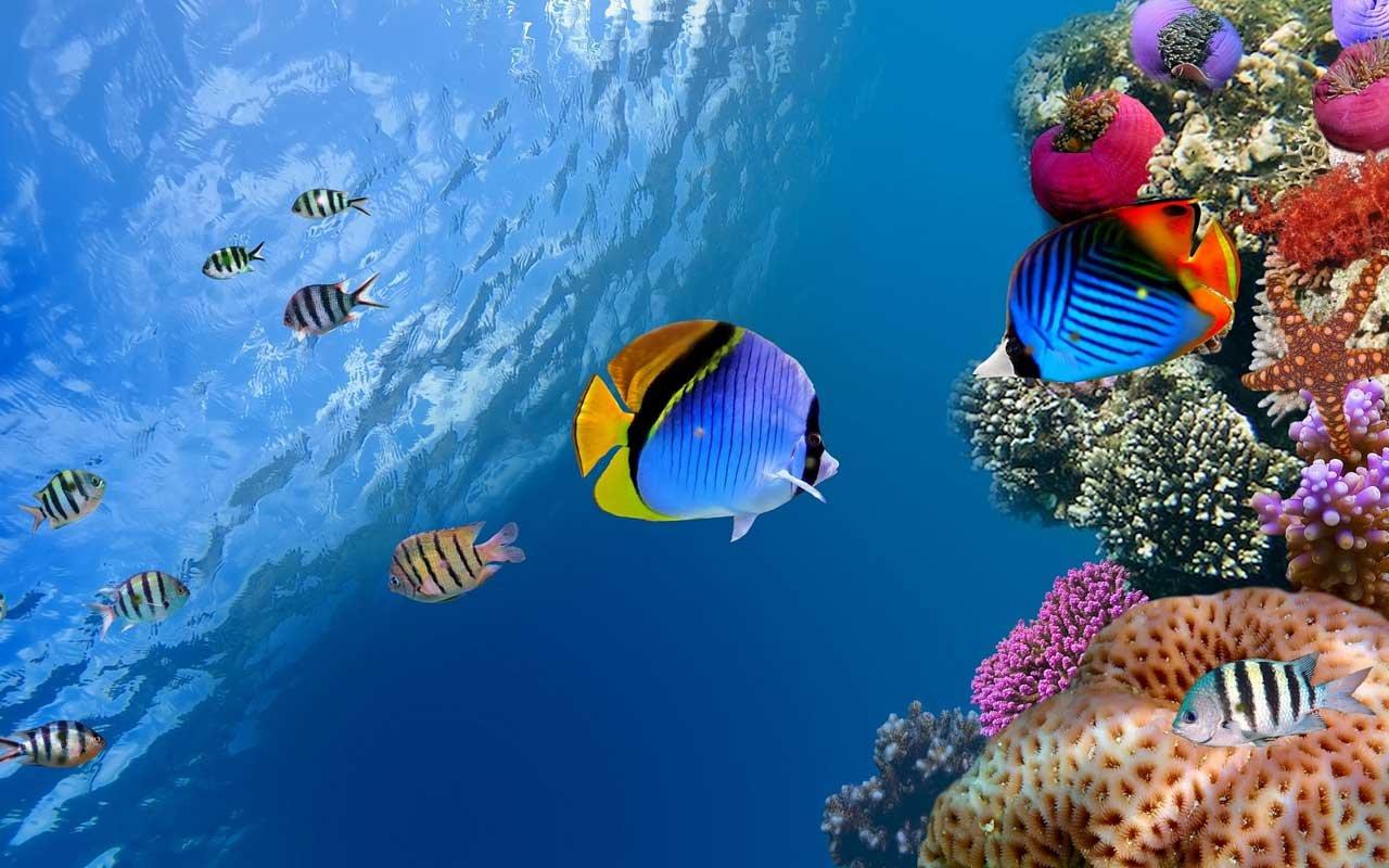 Marine Aquarium Pictures