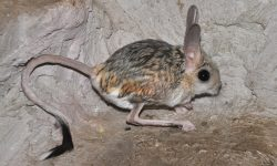 Jerboa for mobile