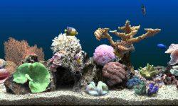 Marine Aquarium HQ wallpapers