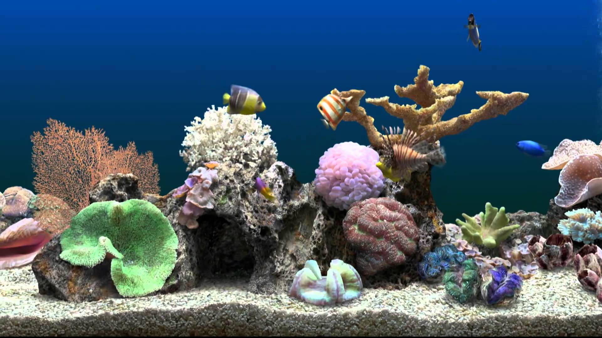 Marine Aquarium HQ wallpapers