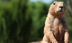 Marmot for mobile