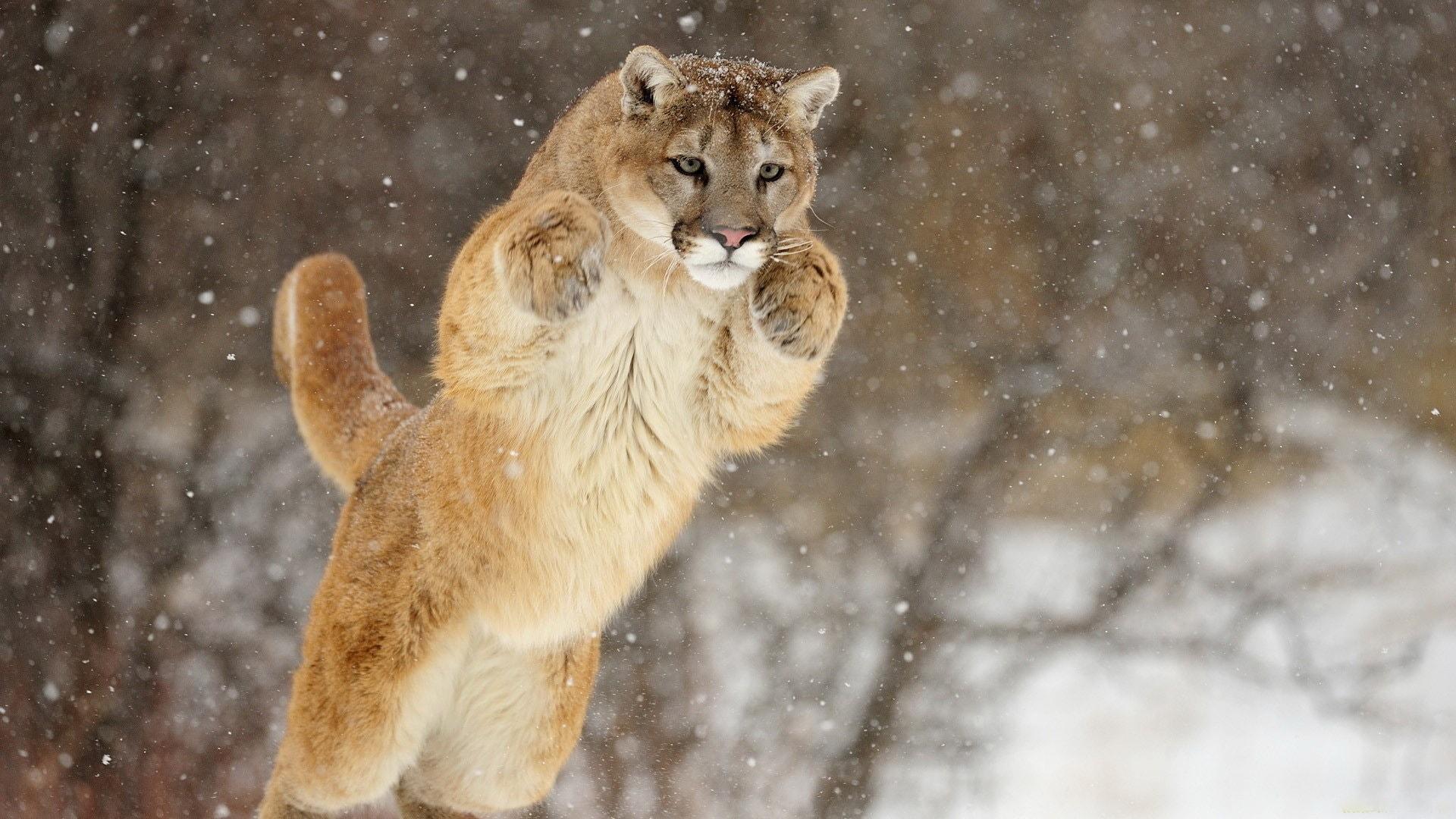Puma for mobile