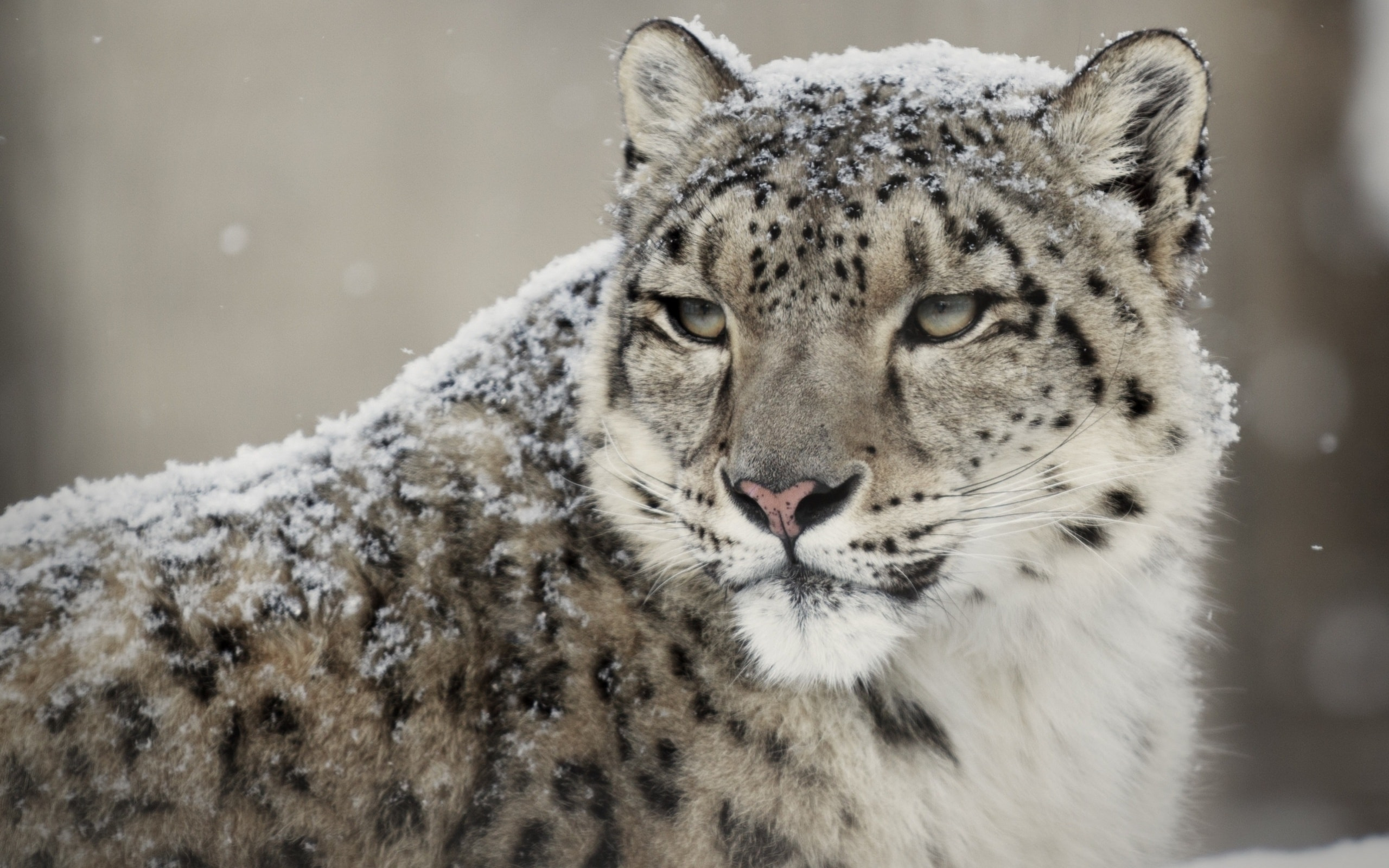 Snow Leopard for mobile