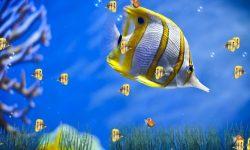 Marine Aquarium Background