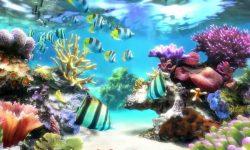 Marine Aquarium Wallpapers hd