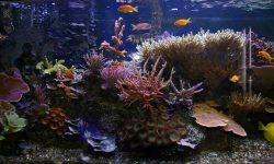 Marine Aquarium Wallpapers