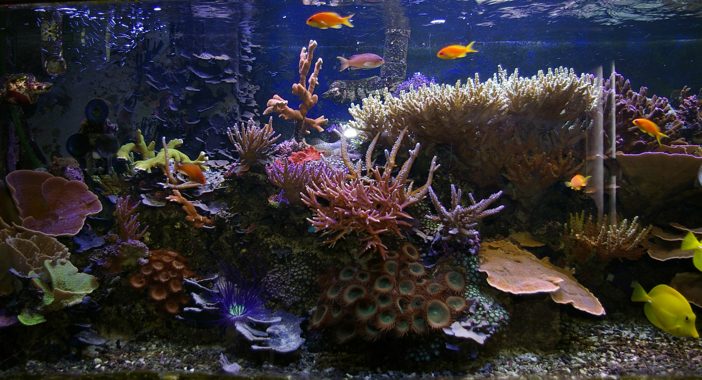 Marine Aquarium Wallpapers