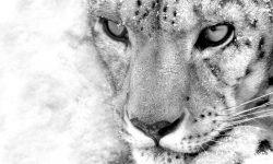 Snow Leopard Desktop wallpapers