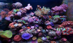 Marine Aquarium widescreen