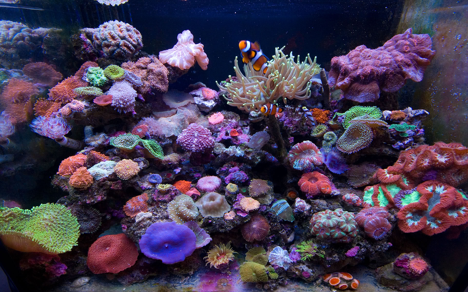 marine aquarium widescreen marine aquarium desktop wallpaper marine ...
