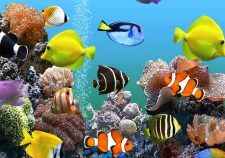 Marine Aquarium desktop wallpaper