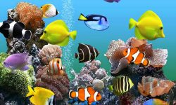 Marine Aquarium desktop wallpaper