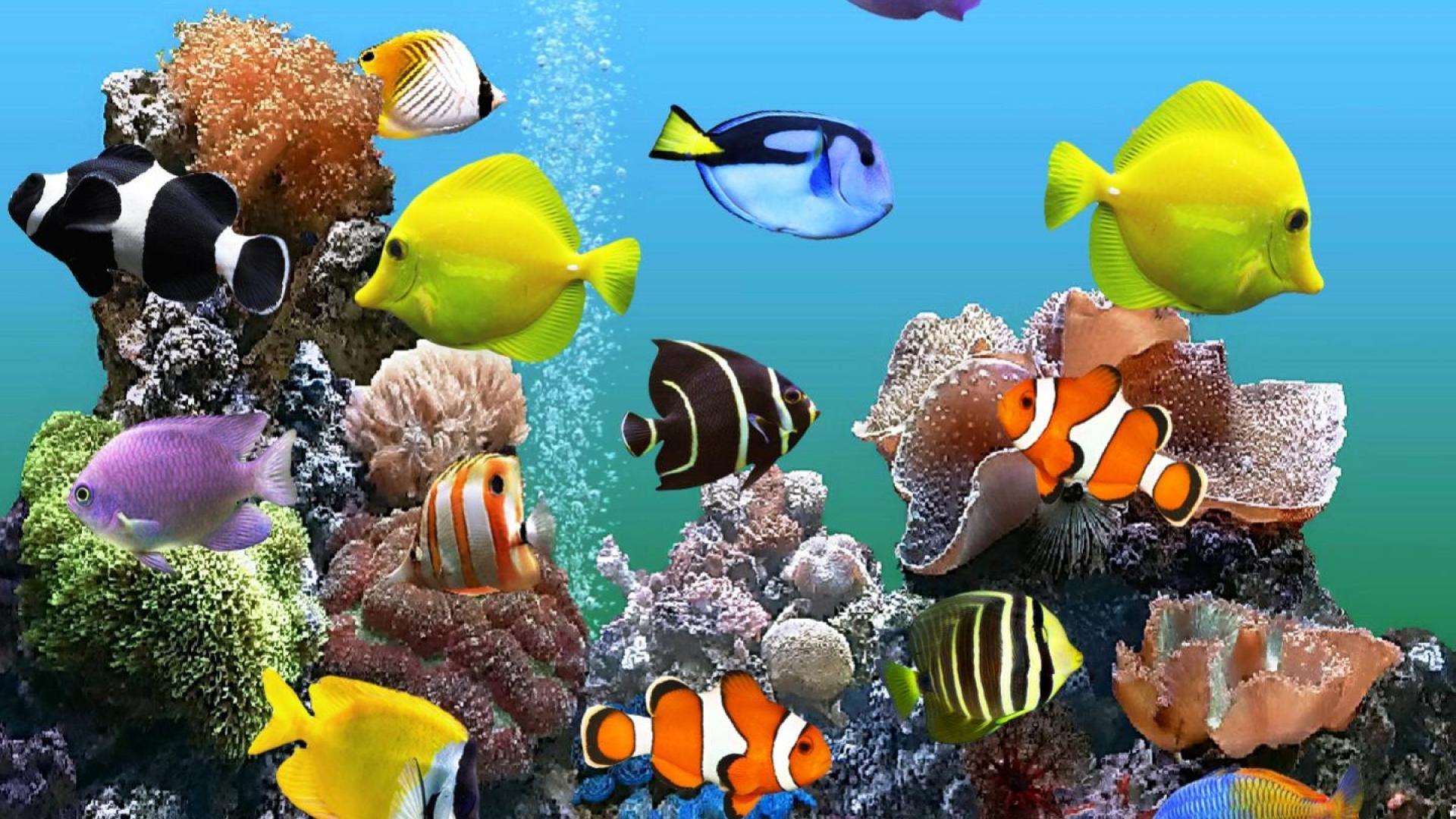 Marine Aquarium Hd Wallpapers 7wallpapers Net