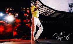 Freddie Mercury HQ wallpapers