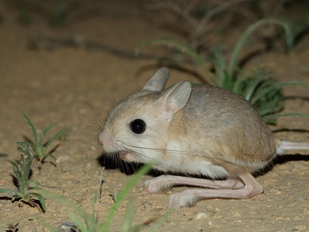 Jerboa Pictures