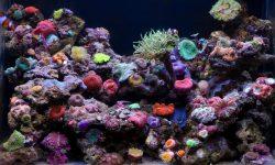 Marine Aquarium for mobile