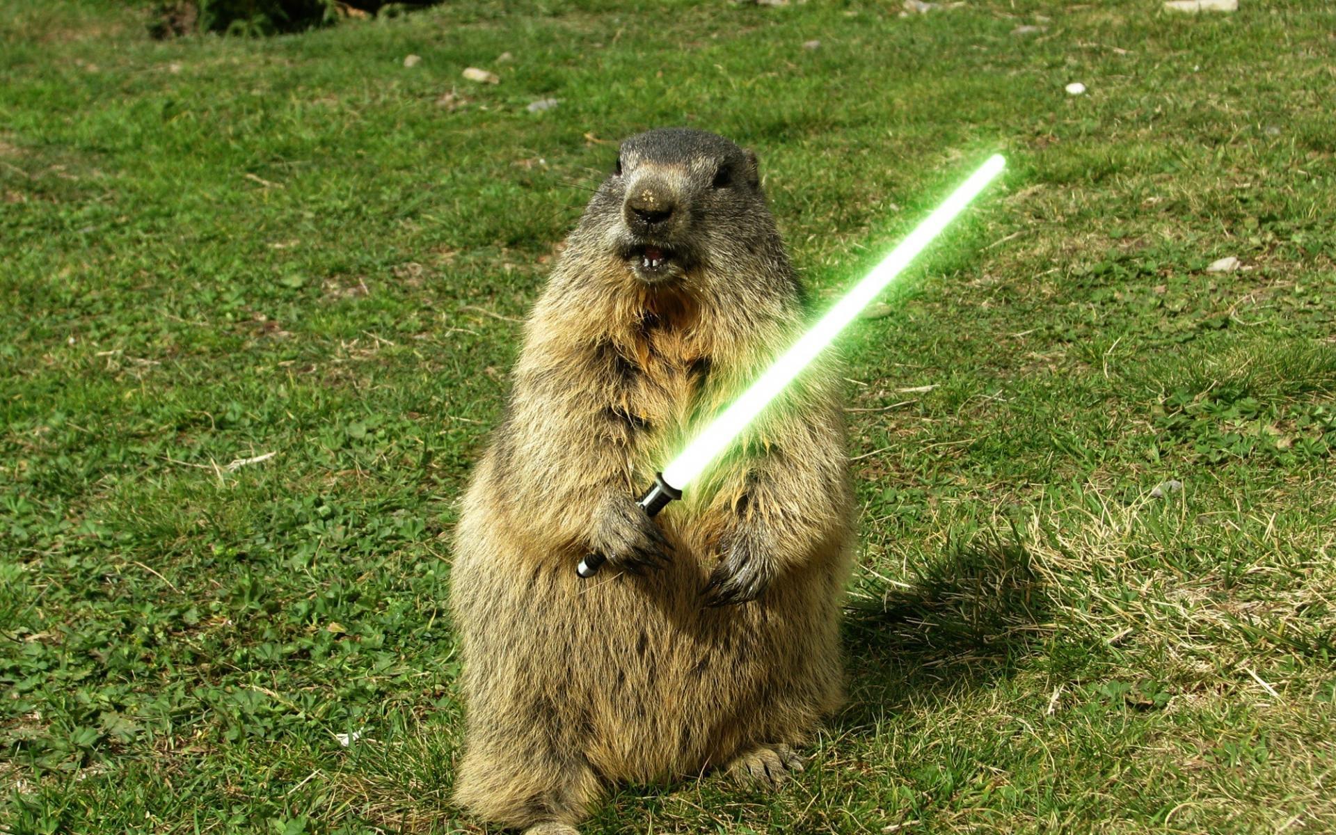 Marmot Pictures