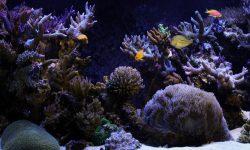 Marine Aquarium widescreen wallpapers