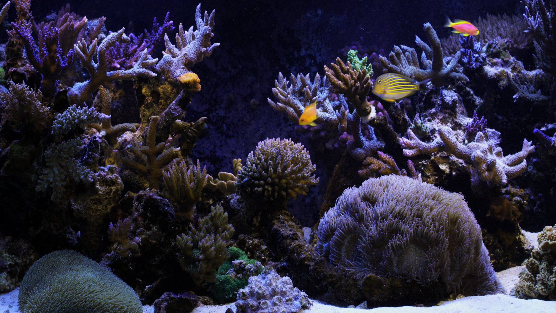 Marine Aquarium widescreen wallpapers