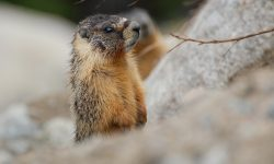 Marmot HQ wallpapers