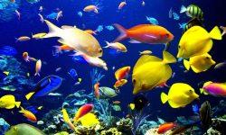 Marine Aquarium full hd wallpapers