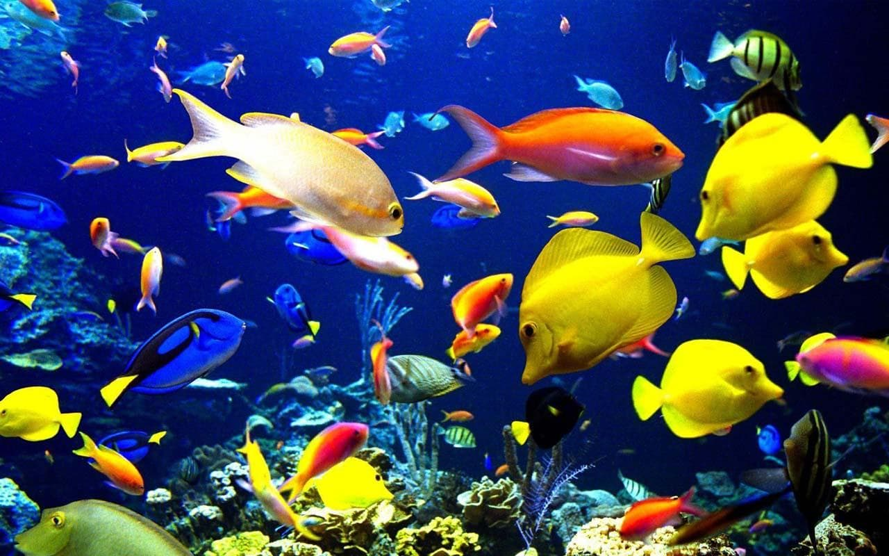 Marine Aquarium full hd wallpapers