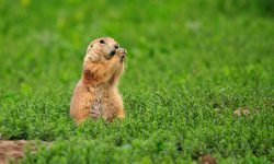 Gopher HD pics