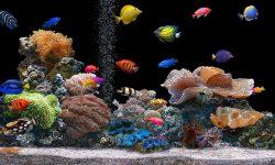 Marine Aquarium HD pictures