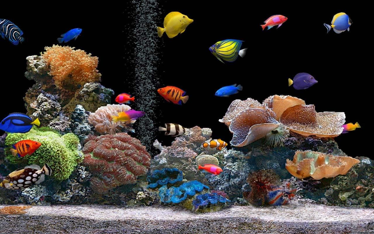 Marine Aquarium HD pictures