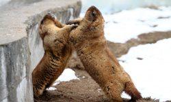 Marmot HD pics