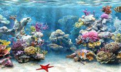 Marine Aquarium Wallpaper