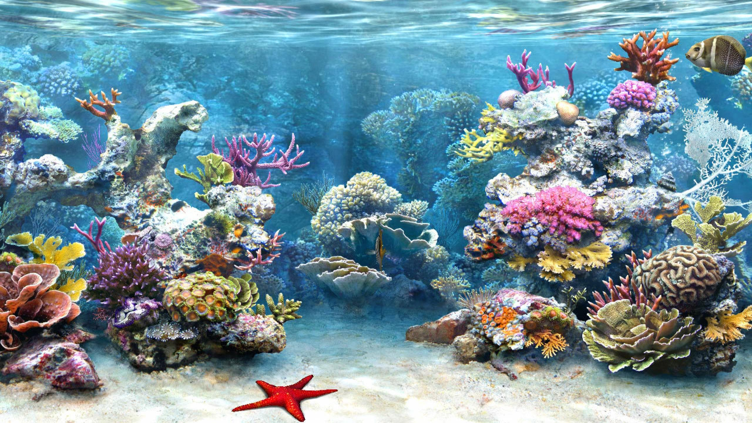 Marine Aquarium Wallpaper